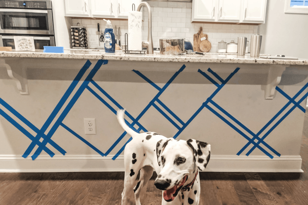 dalmatian standing in front of kitchen island with blue tape