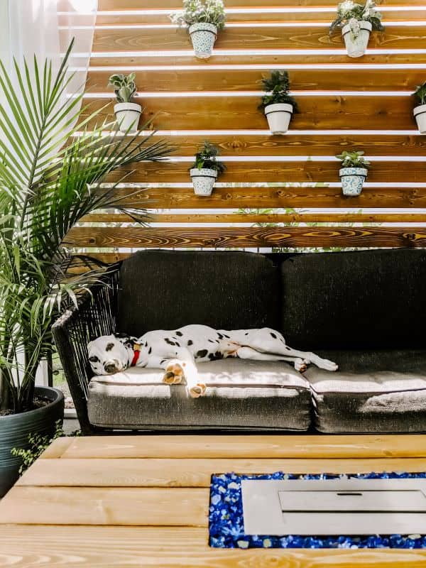 dalmatian laying on screened in porch in front of privacy wall